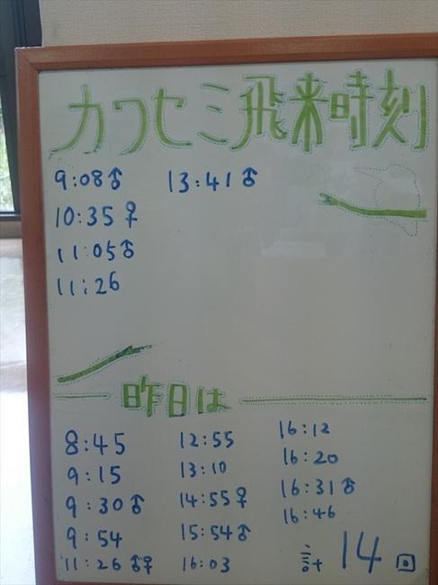 22 - 1カワセミ飛来_R.jpg