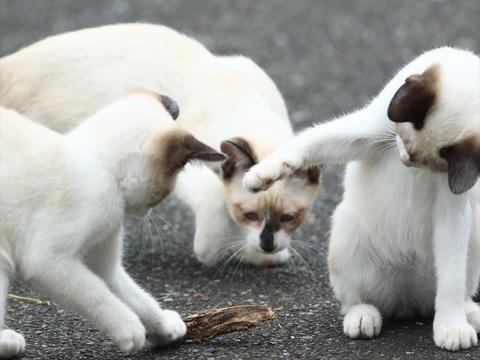3匹の子猫_R.JPG