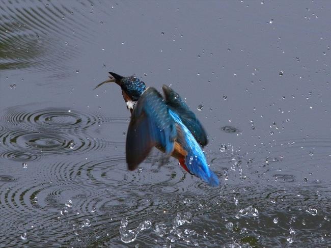 お魚獲り10_R.jpg