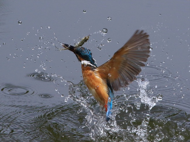 お魚獲り9_R.jpg