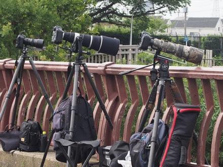 カワセミカメラマン2.jpg
