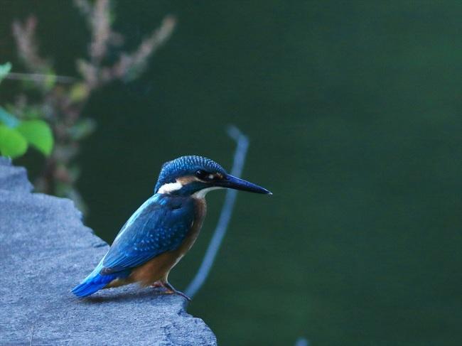 一番子幼鳥1_R.jpg