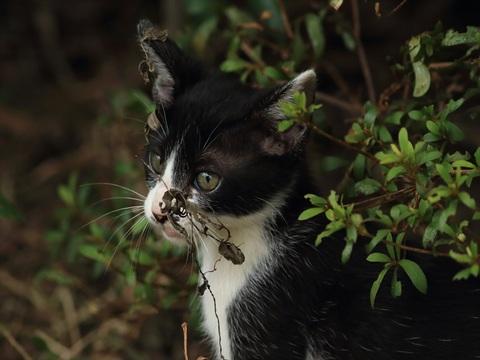 子猫ちゃん1_R.jpg