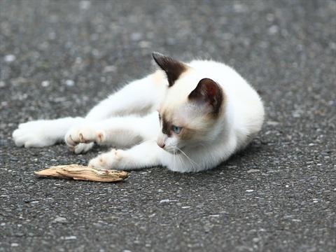 子猫ちゃん_R.JPG