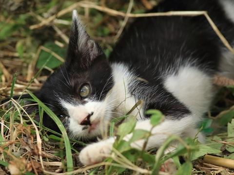 子猫の一匹_R.jpg