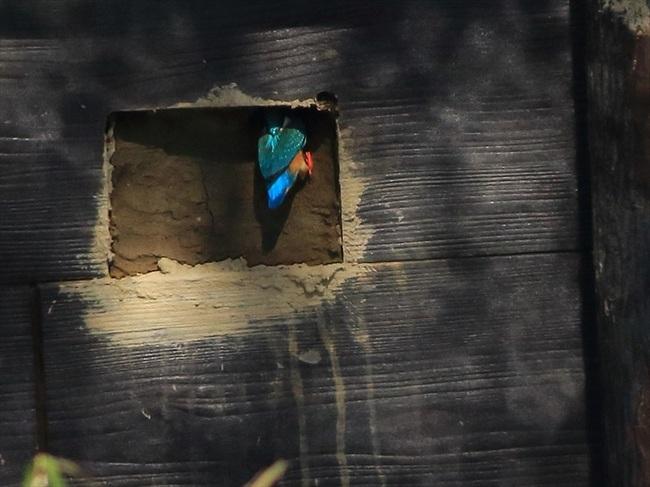 巣穴掘り65_R.jpg