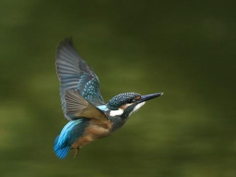 幼鳥飛び出し3_R.jpg
