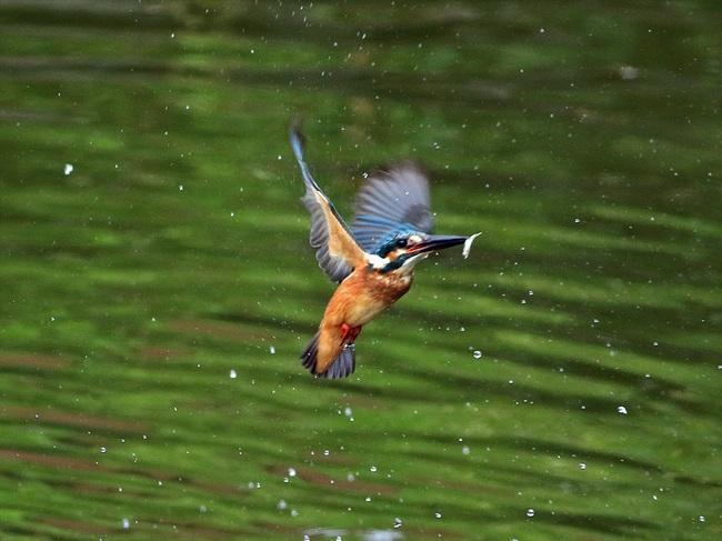幼鳥12の3adobi_R.jpg