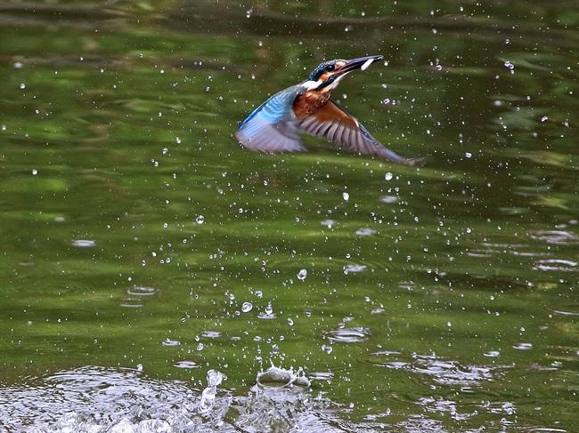 幼鳥13の2adobi_R.jpg