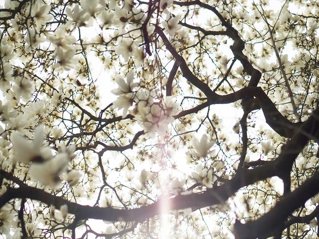 春の予感76_R.jpg