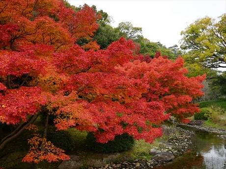 栗林公園 紅葉_R.jpg