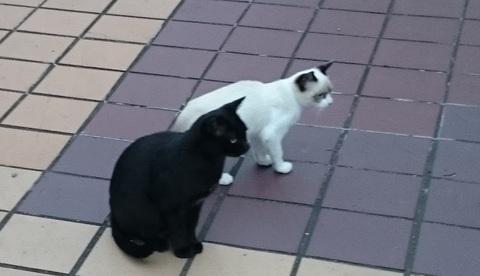 母と子猫.jpg