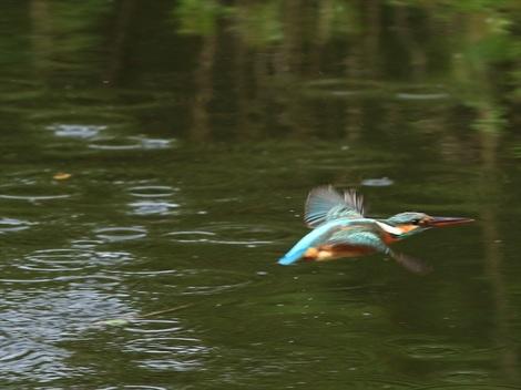 水面飛び出し20_R.jpg