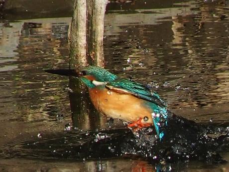 池 飛び出し13_R.jpg