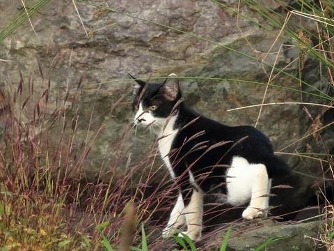 猫トリミング_R.jpg
