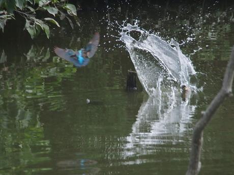 鯉が出た.jpg