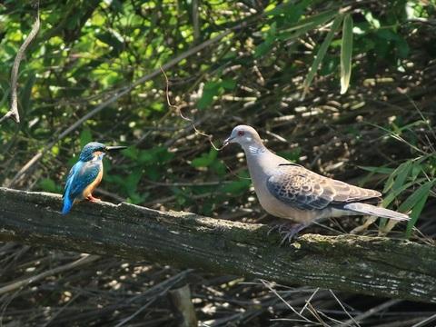 鳩さんと仲良く_R.jpg