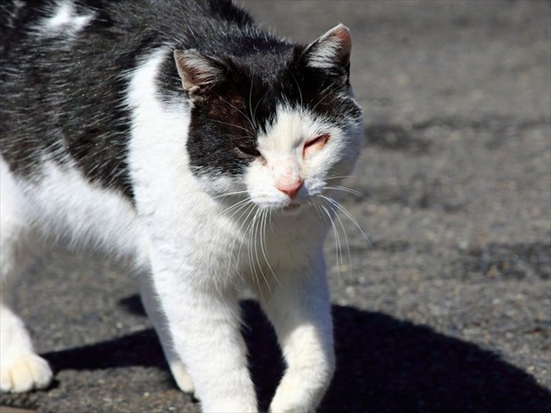 AD猫1_R.jpg
