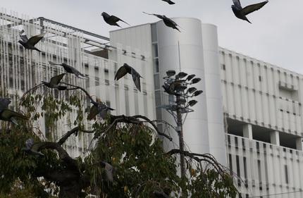 DSC01087舞う鳩.jpg