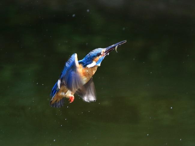 お魚獲り5_R.jpg
