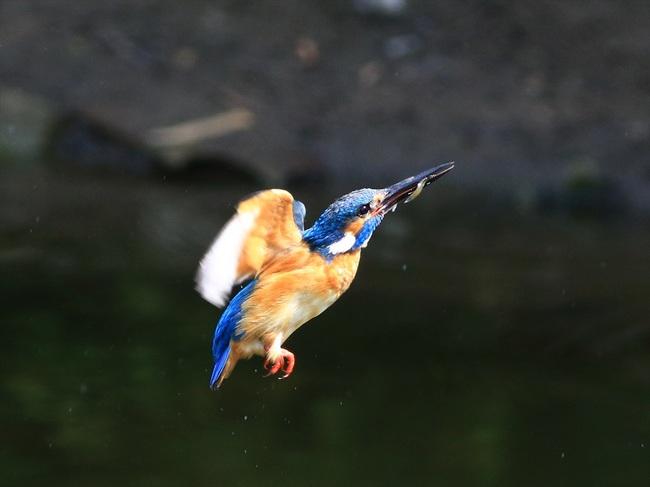 お魚獲り6_R.jpg