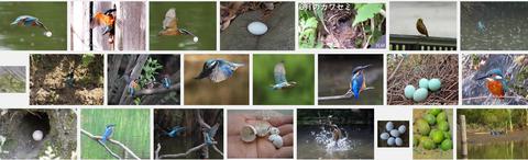 カワセミの卵画像検索.png
