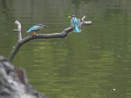 今度こそと期待する若鳥.jpg