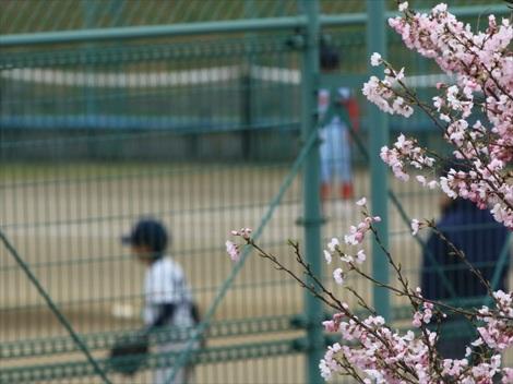 少年野球_R.jpg