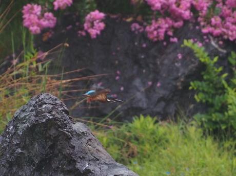 岩からとび2.jpg