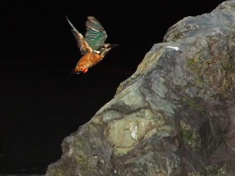 岩近く飛び1.jpg
