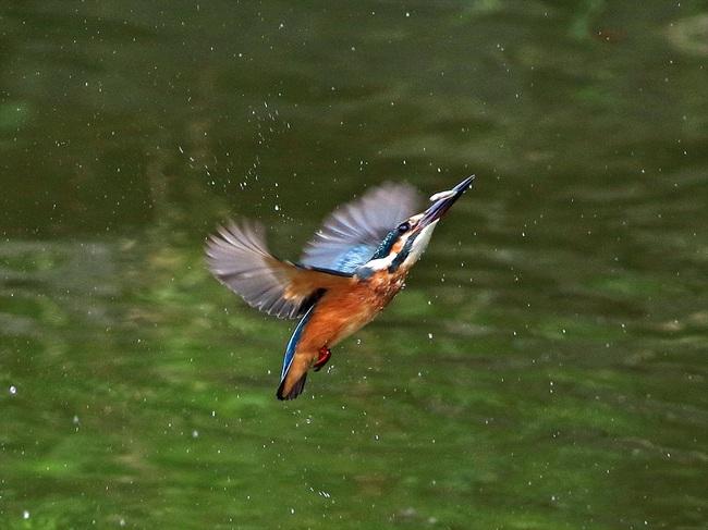 幼鳥11の3adobi_R.jpg