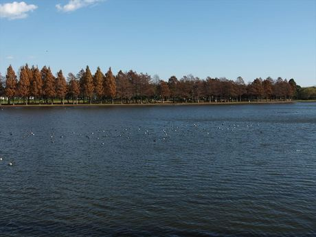 水元公園2_R.jpg