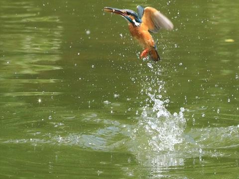 水面飛び出し30_R.jpg