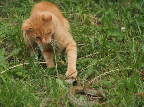 P6020535猫パンチさく裂.jpg