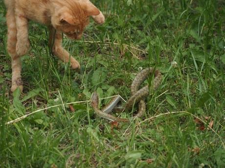 P6020543蛇も反撃.jpg
