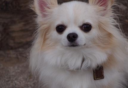 PA120005公園で出会った犬さん.jpg